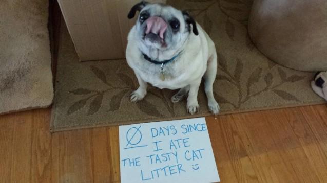M Dog Ate Cat Litter