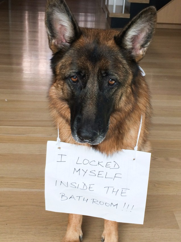 Self Locking Dog Dogshaming