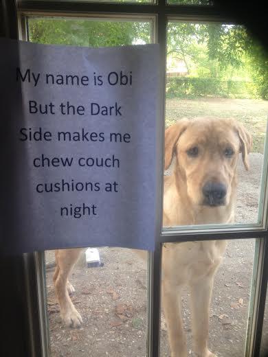 Obi-Shame