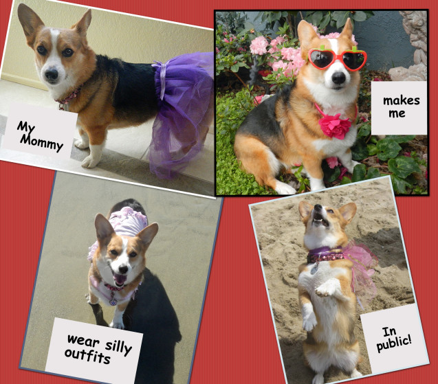 dog-shaming-collage