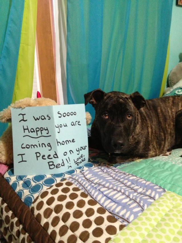 duke-dogshaming