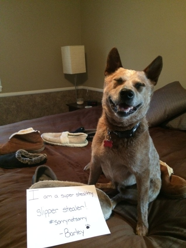 Barley-Dog_Shaming