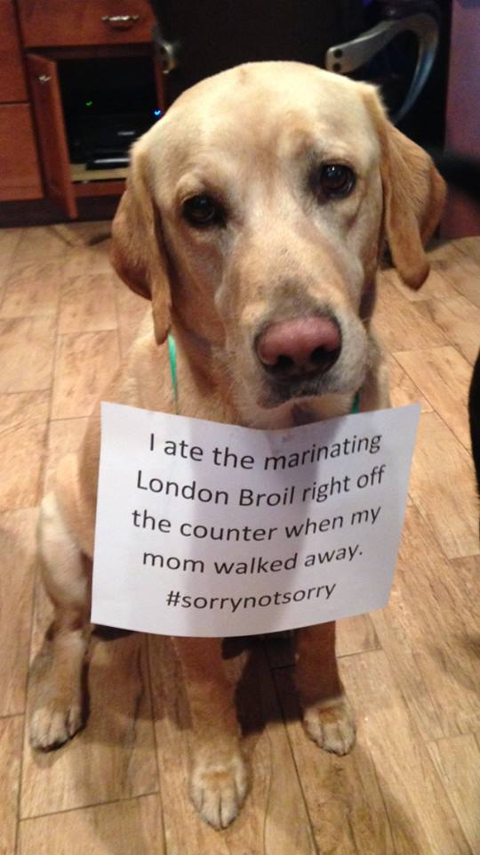 Bentley-Dog-Shaming