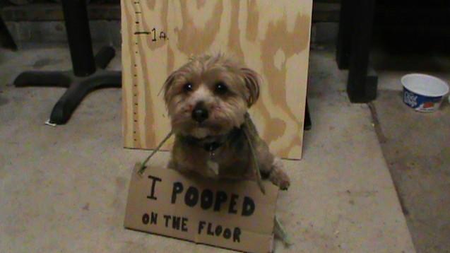 Floor-Pooper