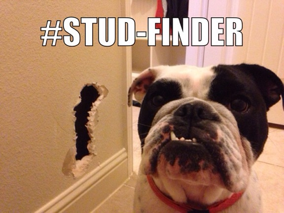 Pepper-Stud-finder