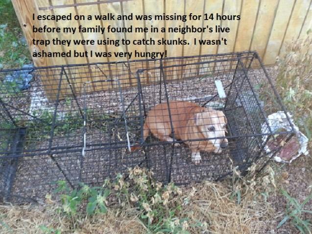 Bandit-Dog-Shaming