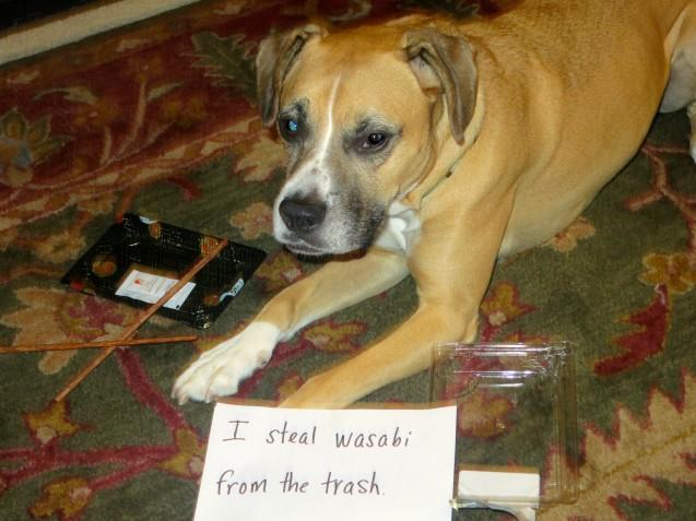 Neighbour S Dog Barks When Left Alone