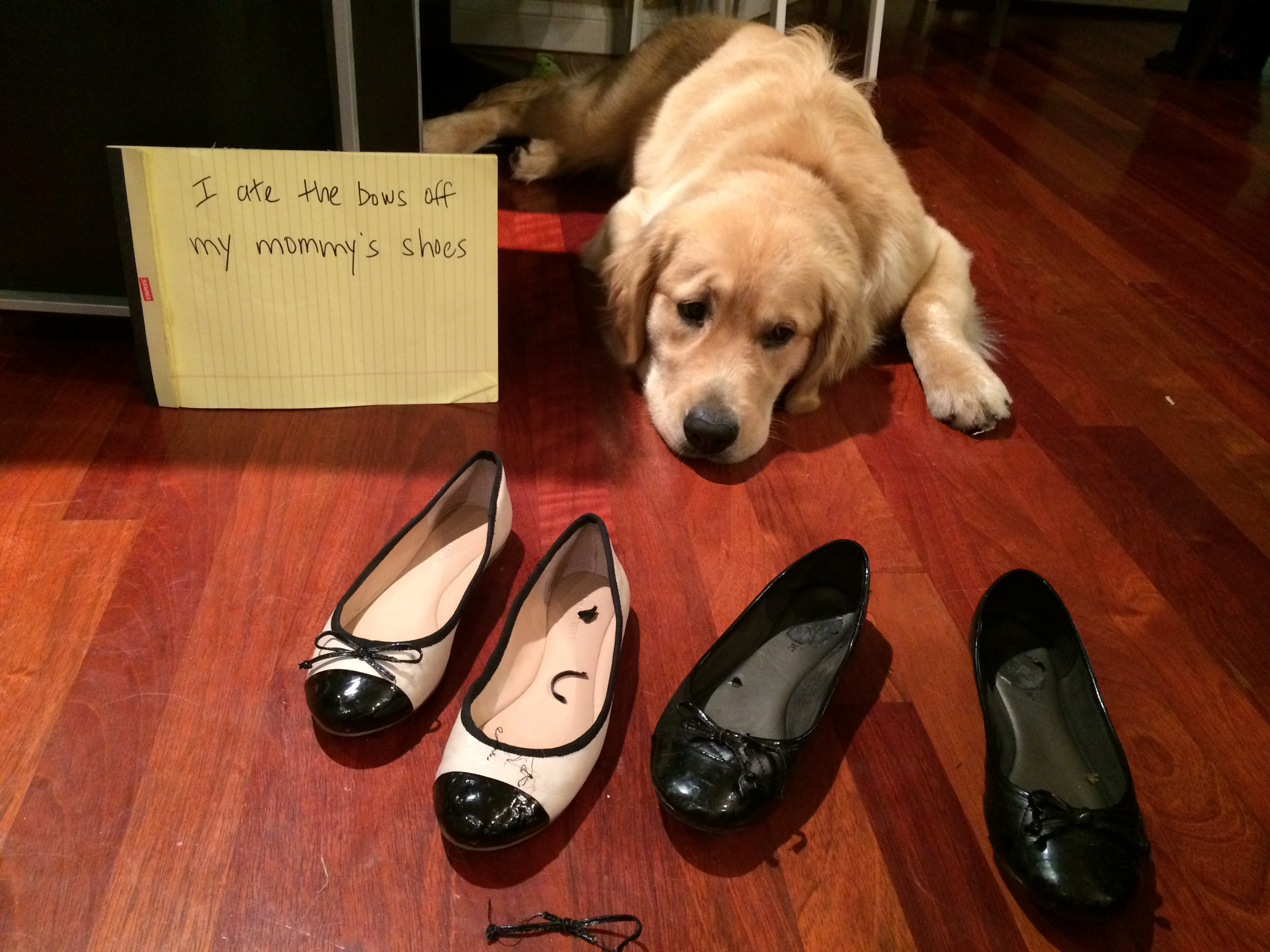 Golden Retriever Archives Page 8 Of 29 Dogshaming