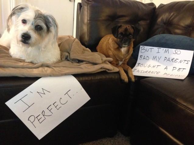 dog-shaming3