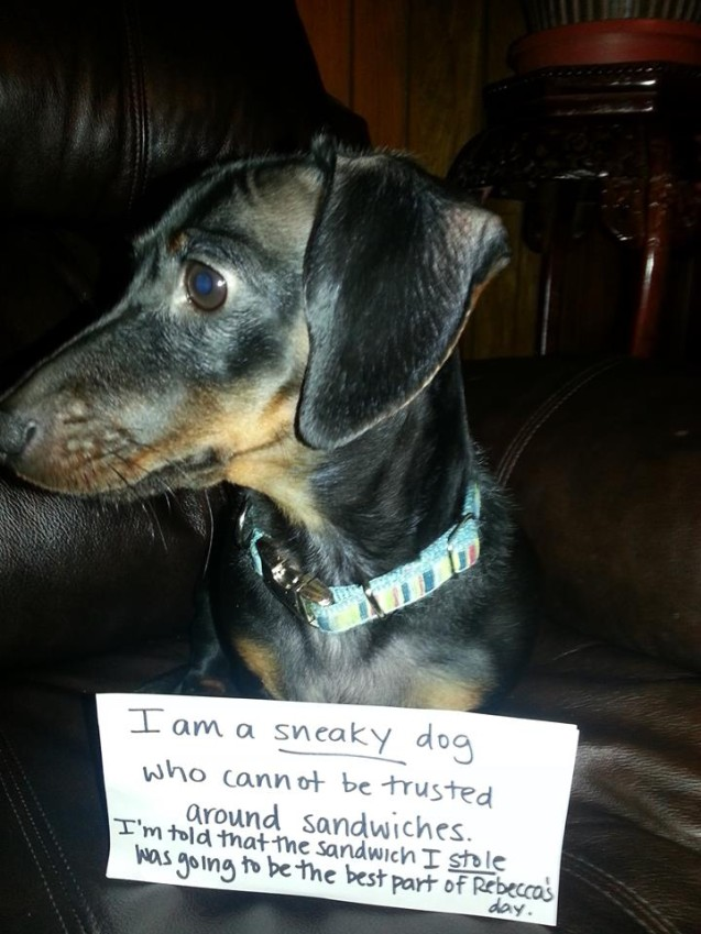 jettadogshaming