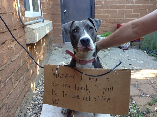 lucy-dog-shaming-pic