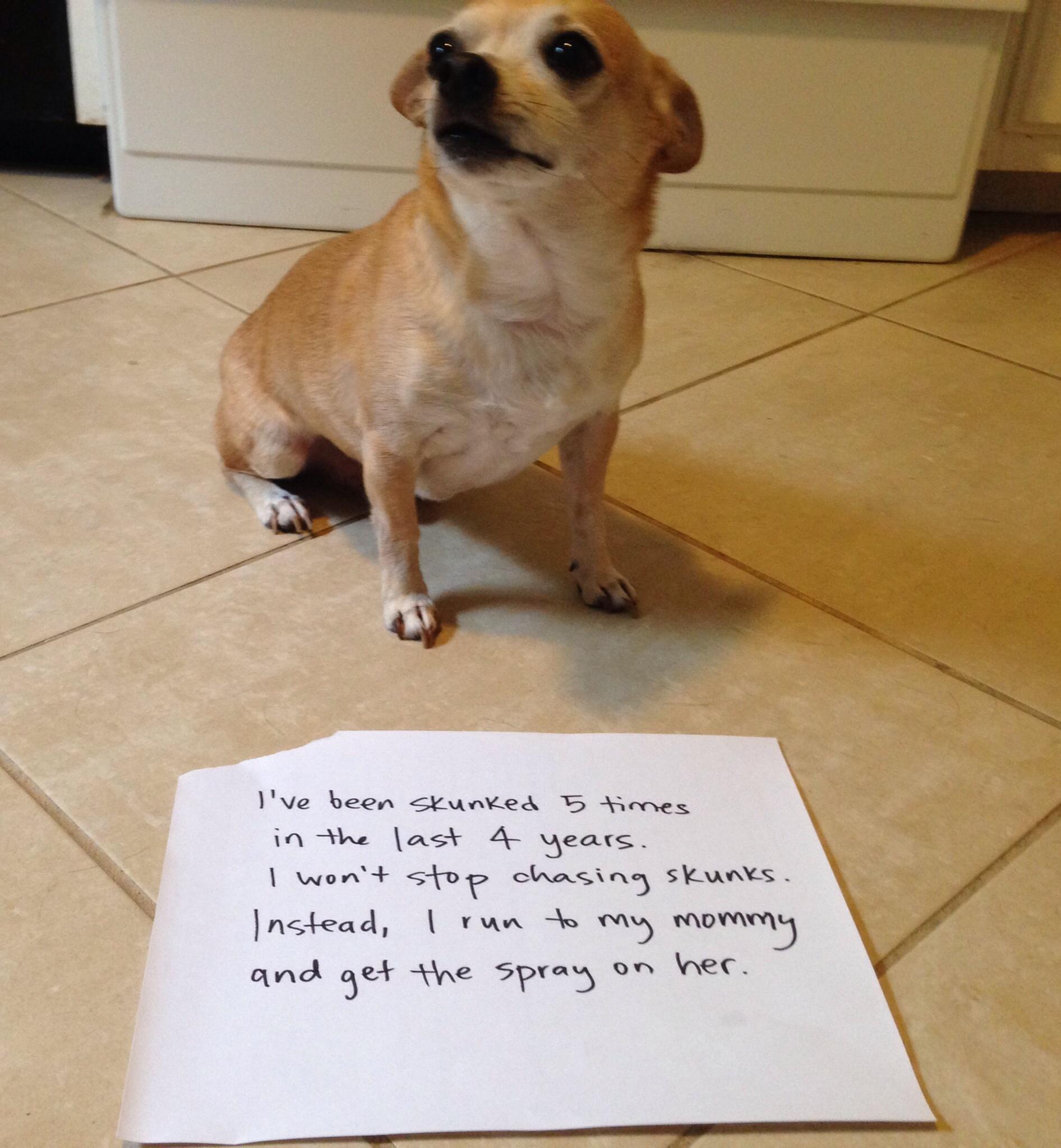 My Dog Wont Stop Licking Carpet: Dog Shaming