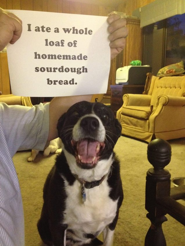 Lucy-and-bread