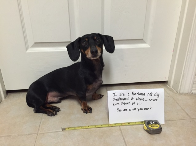 Baxter-dog-shaming