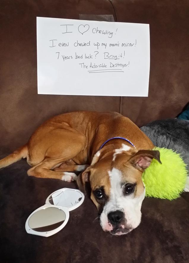 Becky-Dog-shamed-2014