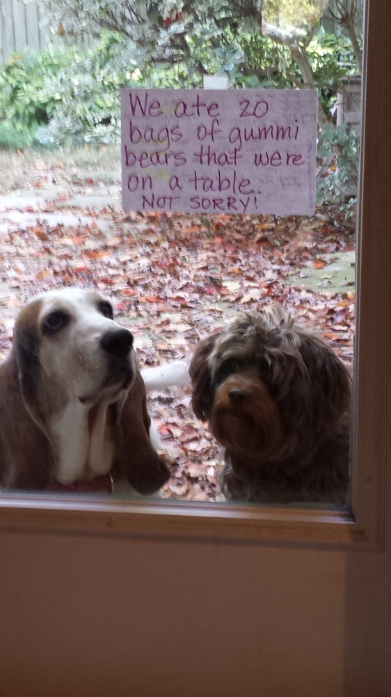DogShaming_1