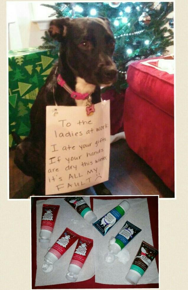 Elora-dog-shaming