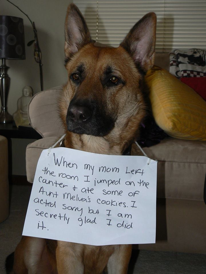 German Shepherd Dog Archives Page 2 Of 8 Dogshaming