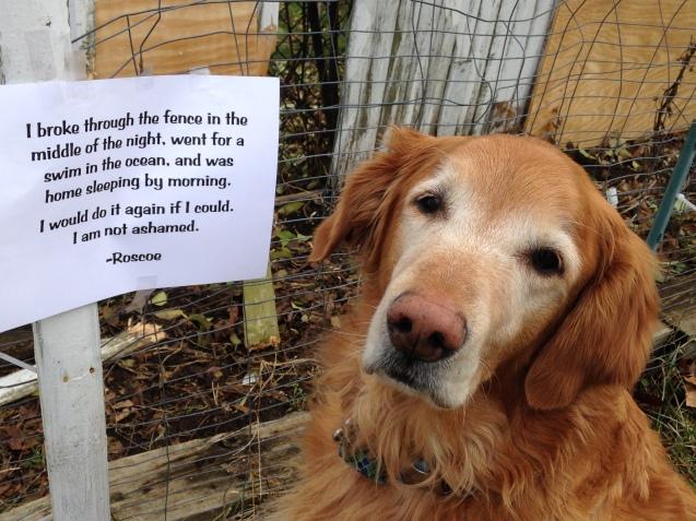 Roscoe-dogshame