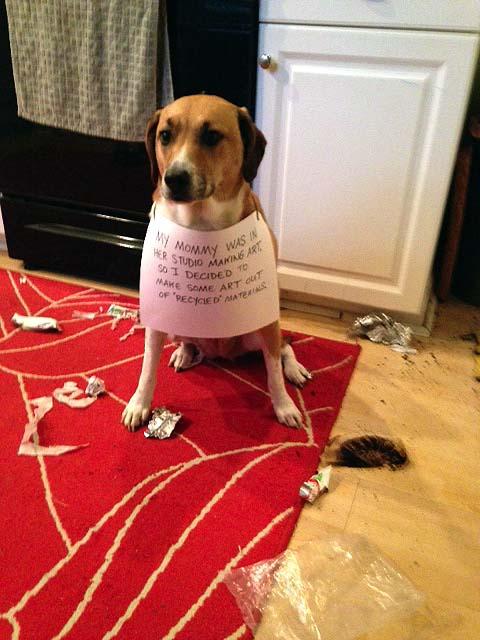 Dog Eats Poop To Hide It