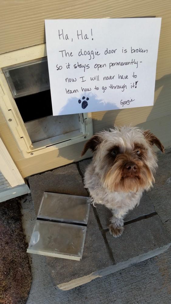 Doggie-Door-101