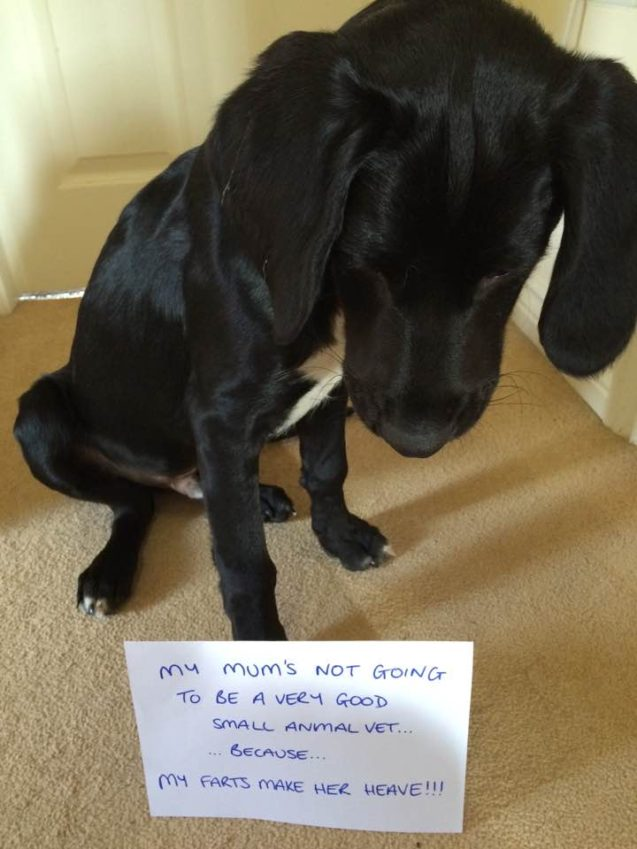 Angus-Dog-Shaming
