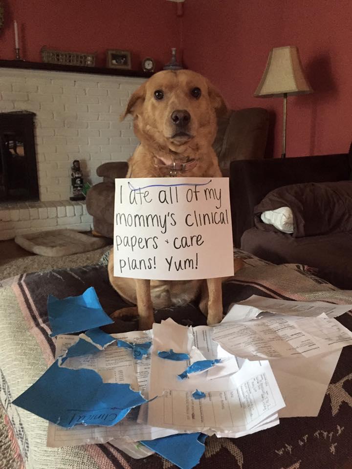 Wannabe Nurse