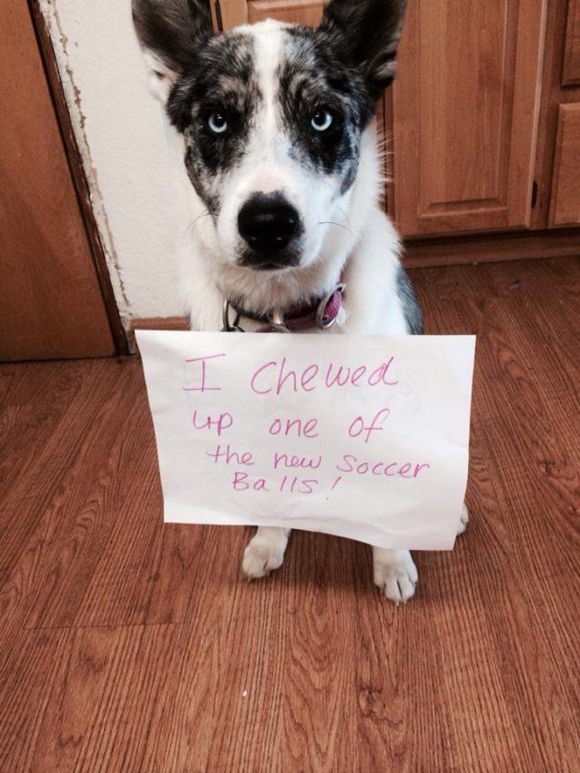 I had a Ball! - Dogshaming